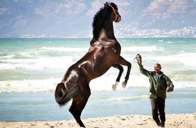 Beach rehab for horses