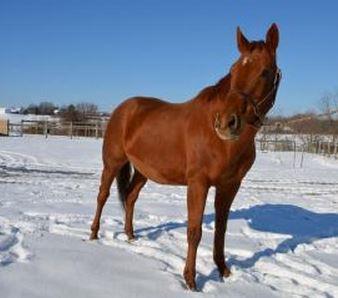 Vet Foal Cam My Special Girl