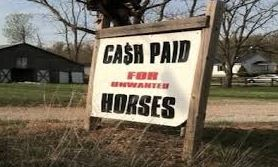 Cash for unwanted horses