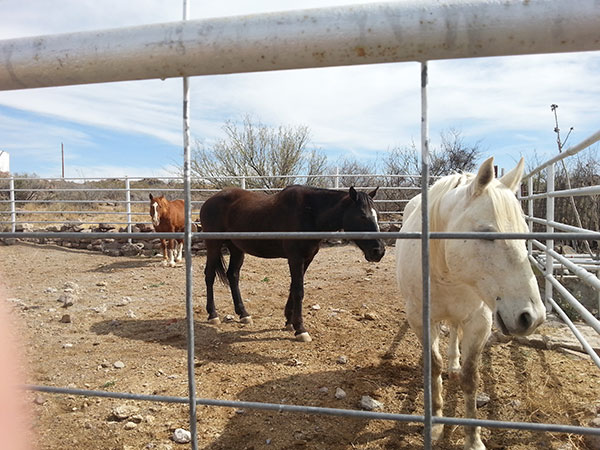 2 of the horses that we brought back.