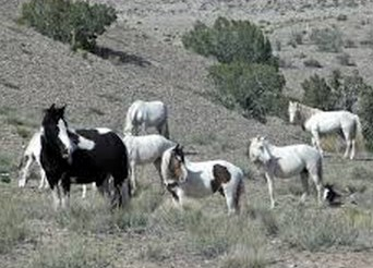 Wild Horses of Placitas New Mexico