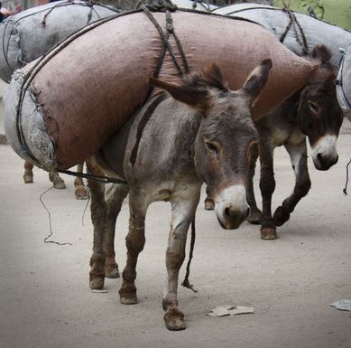 donkey suicide bombs used by Hamas