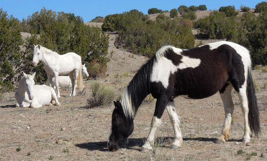 Placitas horses...not wild