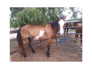 Habitat for Horses ... adoptable horse Asia