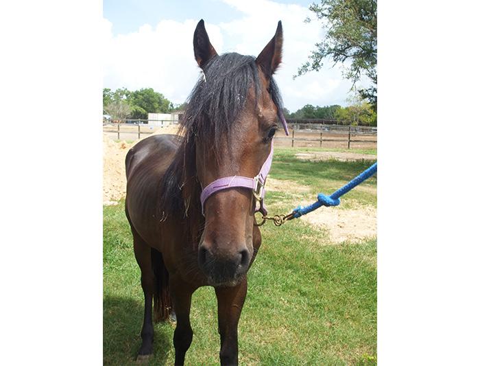 Reno - handsome young adoptable horse