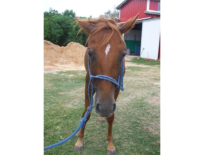 Loleta - Adoptable Quarter Horse