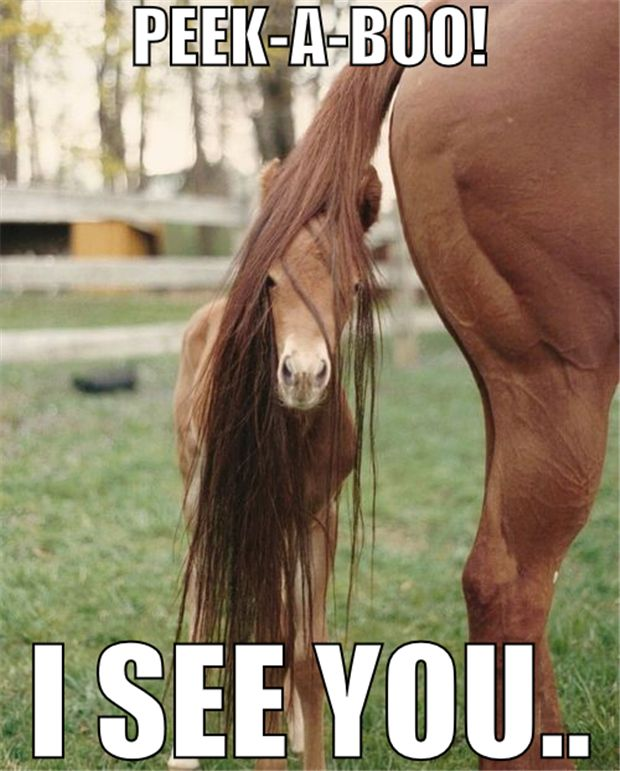 Horse pictures funny images