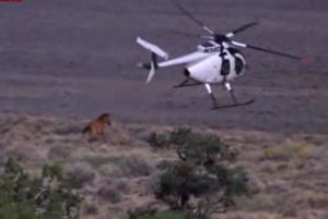 blm helicopter horse round up