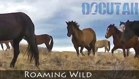 Roaming Wild Documentary