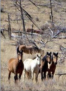 wild horse Meda Verde Natl park