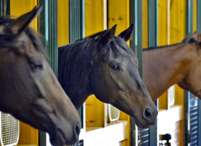 retired race horses