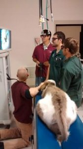 Texas A & M vets saving baby donkey Hollis