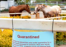 Horses in quarantine