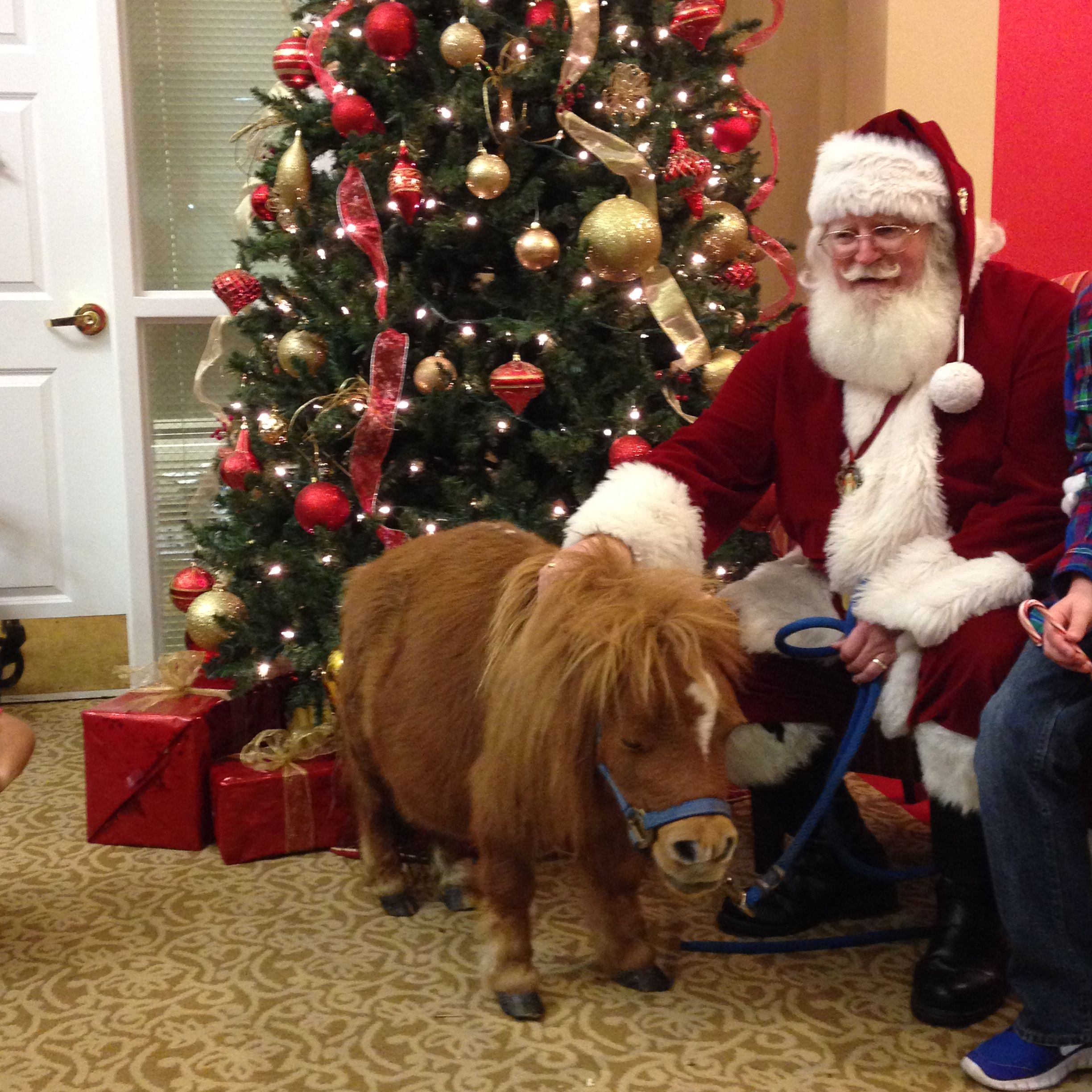 Munchie the mini horse and Santa