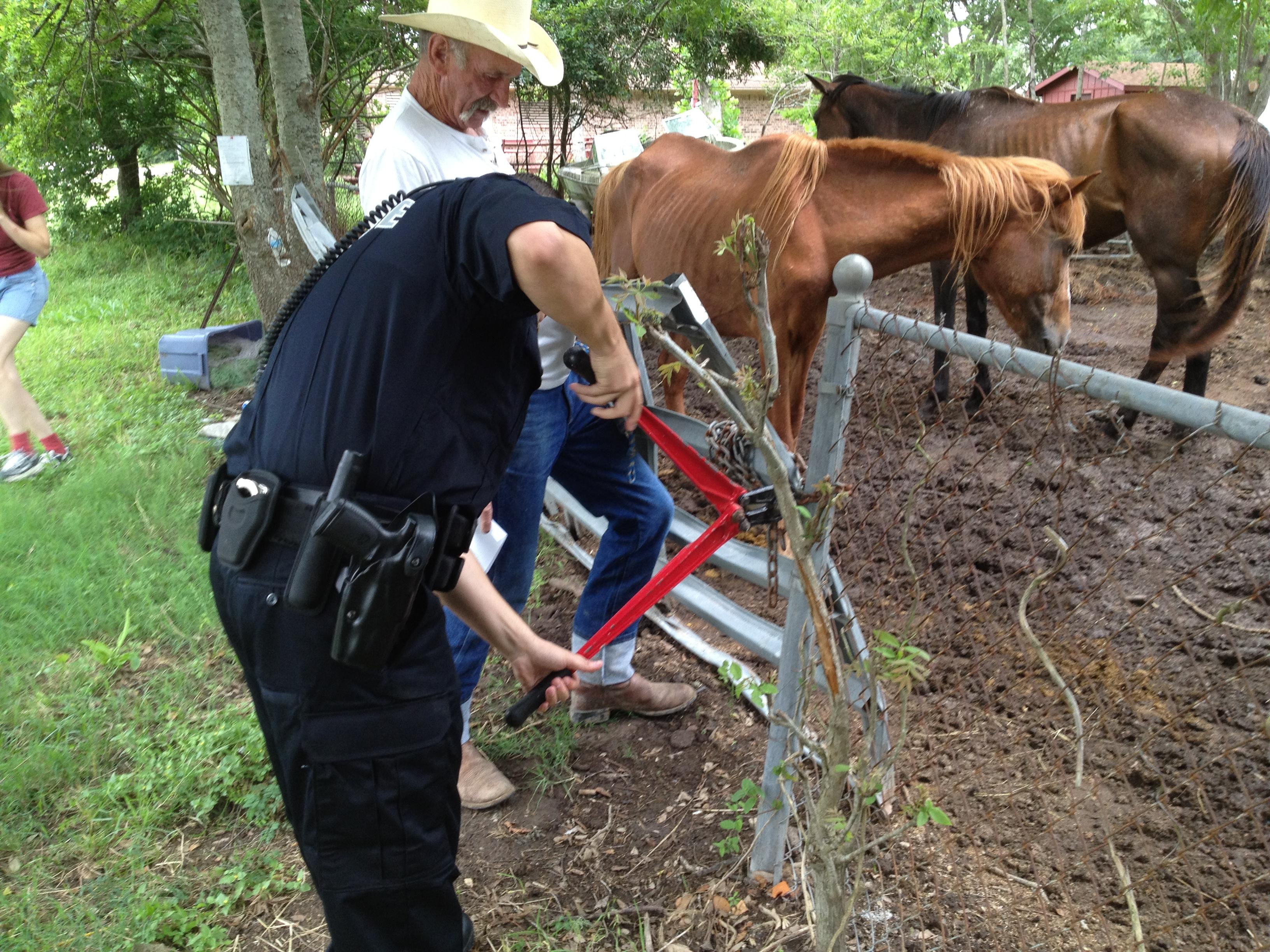 horse seizure
