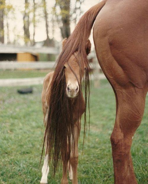 cute baby horse and Mama