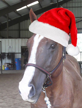 tumbler the horse at christmas