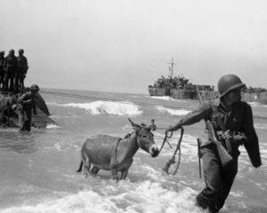 donkeys_in_battle