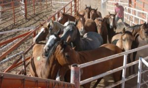 horse_meat_new_mexico