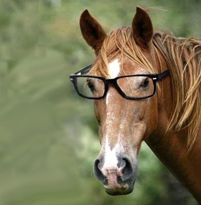 horse wearing eye glasses
