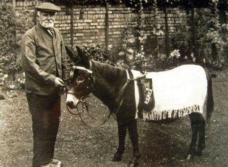 Jimmy the scottish war donkey