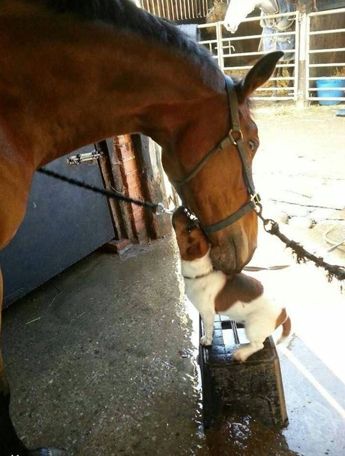 The Tiny Horse Loves His Giant Dog