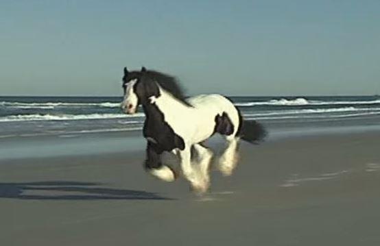 horse on beach