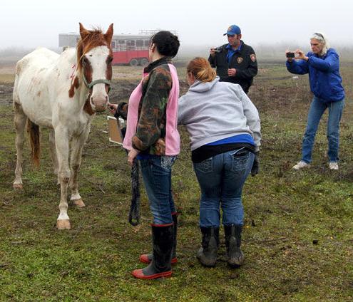 Galveston horse seizure