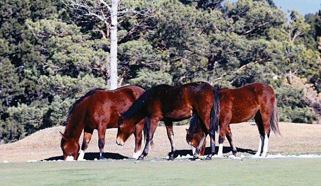 wild horses in Ruidoso New Mexico