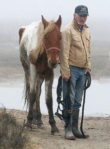 horses seized in Galveston go to Habitat for Horses