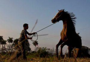 cuban horse trainers