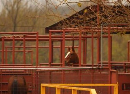 Equine Welfare Alliance & Wild Horse Freedom Federation report