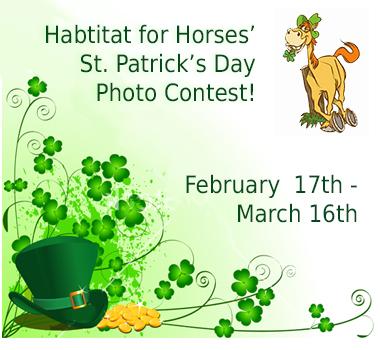 Habitat for Horses' St. Patrick's Day Photo Contest