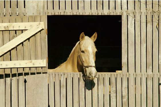 horse in a stall