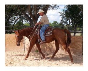 Habitat for Horses rehabilitation ranch