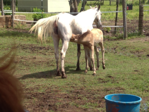 Everyone enjoyed watching Alma and her foal