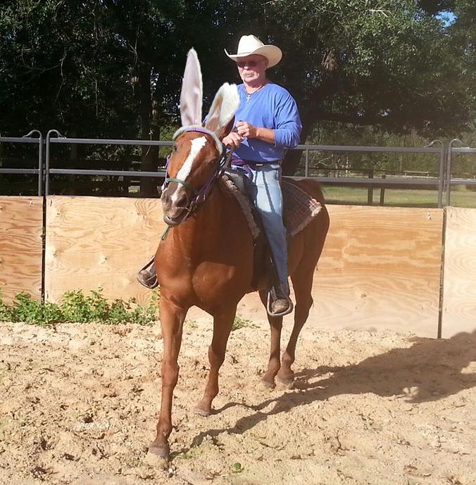 Choctaw adoptable horse