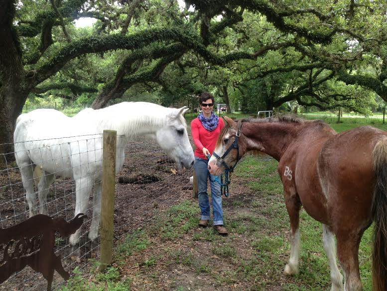 adopted horse Billy meeting new friends