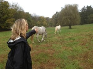 troubled teens and horses