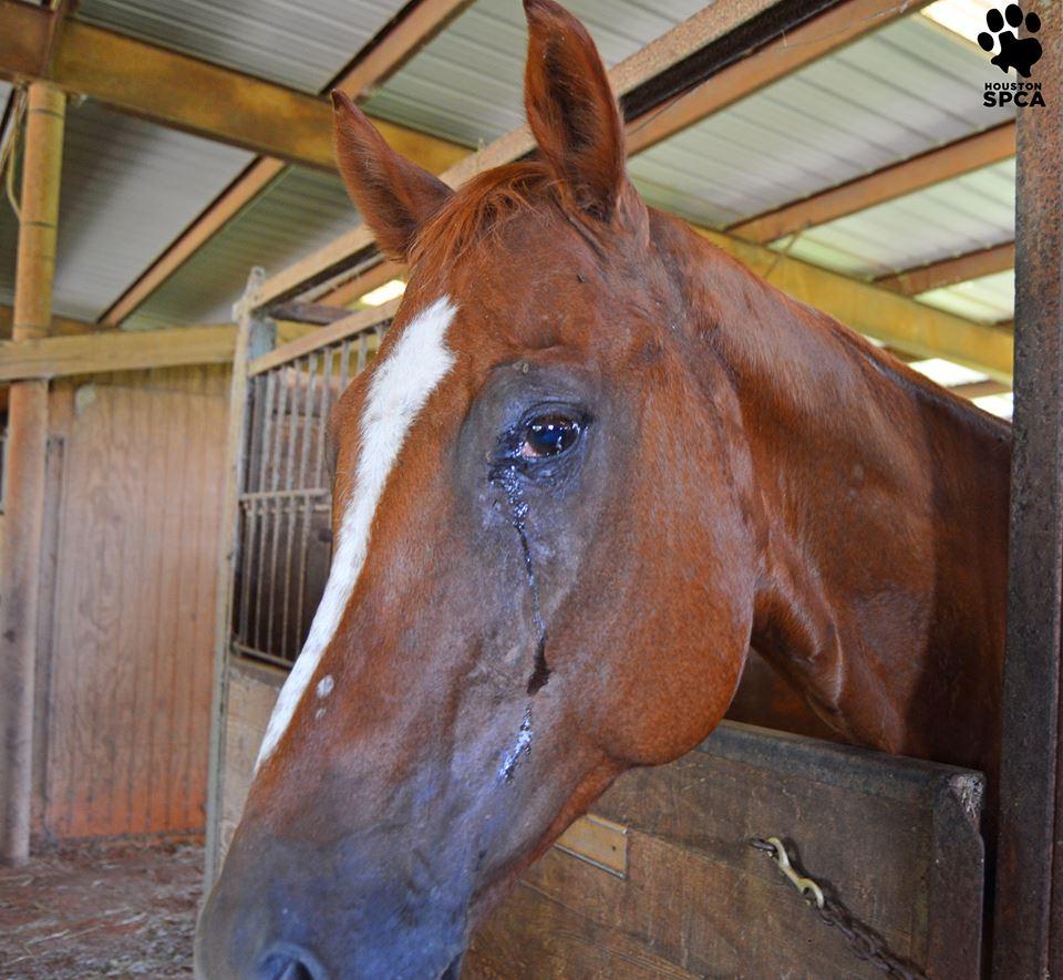conroe_horse