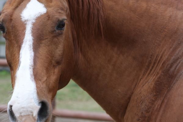 Stop horse slaughter facilities from opening in the United States!