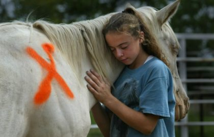 horse_slaughter_pic