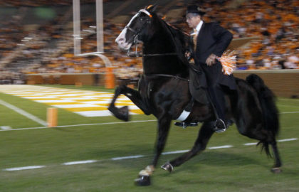 horse_soring