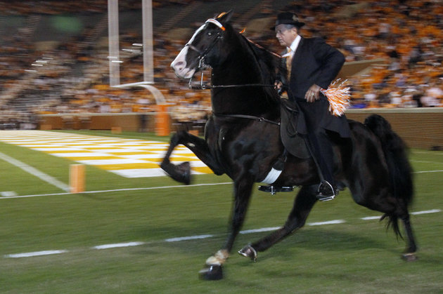 World Grand Champion walking horse Watch it Now ridden by trainer Jimmy McConnell, from Shelbyville, Tenn., makes its way around Neyland Stadium before an NCAA college football game between Memphis and Tennessee, Saturday, Nov. 7, 2009, in Knoxville, Tenn. (AP Photo/Wade Payne)