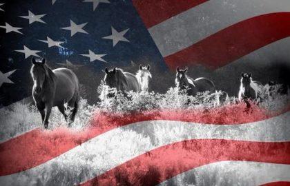 horsesflag