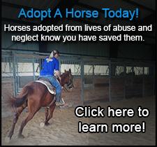 adopt_a_horse_225