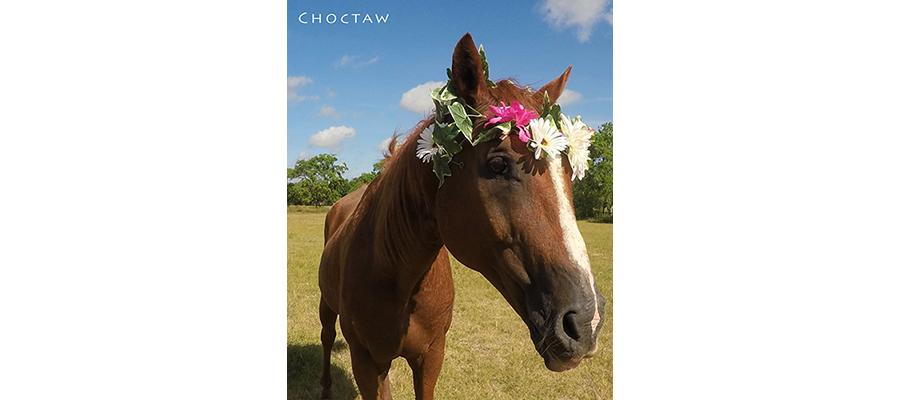 choctawFP_900