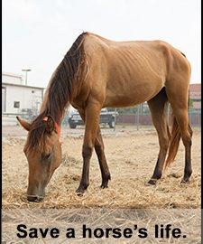 save_a_horses_life