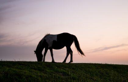 animal-silhouette-horizon-horse