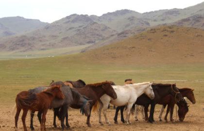 blue-ribbon-horse-600×428